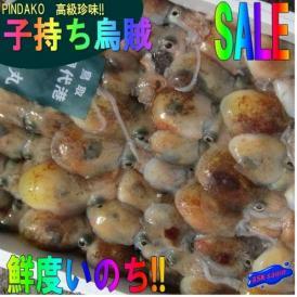 ピンダコ3kg(冷凍) みみいか ミミイカ 烏賊