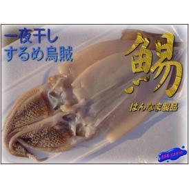 スルメイカの一夜干し10枚(2枚入り×5個)2kg以上 するめいか スルメイカ 烏賊 しまめ シマメ 真烏賊 まいか マイカ