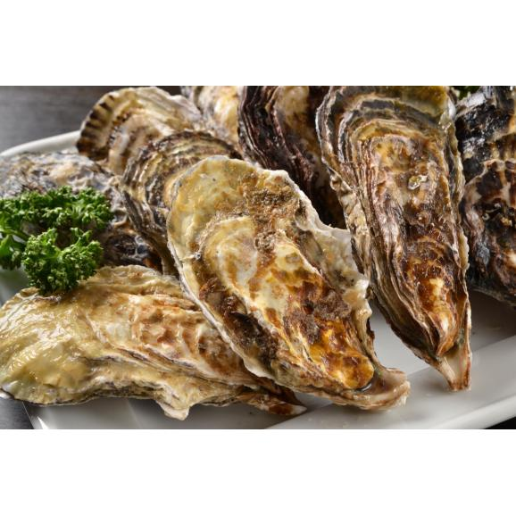牡蠣 大粒 3L 広島県産 超特大 かき カキ 鍋 焼き牡蠣 貝 海鮮 希少 大粒 むき身 オメガ3 送料無料 贈物 プレゼント04
