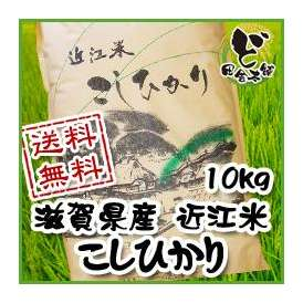 【送料無料】 28年 滋賀県産 近江米 こしひかり 10kg