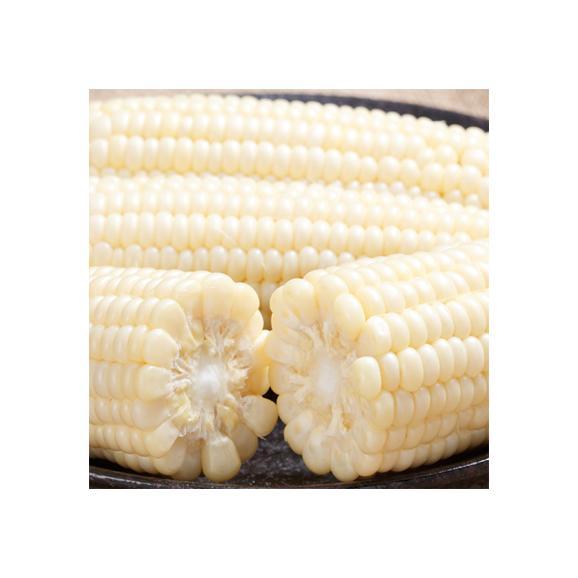 北海道産 ピュアホワイト 大粒 2L 10本(北海道 トウモロコシ 350g前後 南幌町)北の大地の香りと上品な甘み、ギフトにも大好評、高評価ありがとうございます!02