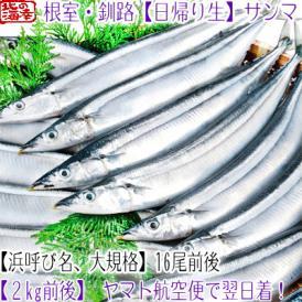 北海道 生サンマ (大、浜呼び名)2kg前後 16尾前後(北海道産 生さんま 根室 釧路 厚岸 翌日着)鮮度が命、氷の量も一目瞭然、高評価ありがとうございます!