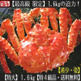 タラバガニ(姿)最高級 特大 特4級 1.6kg前後(ボイル済 北海道)優しい甘み、ギッシリ詰まった蟹身は絶品。ギフトにも大好評、高評価ありがとうございます!