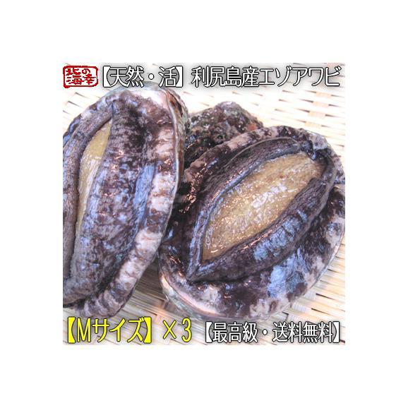 北海道 利尻島産(活 M)エゾアワビ 70g×3(北海道産 最高級 黒あわび)利尻昆布を食べて育った最高級品。ギフトにも大好評、高評価ありがとうございます!01