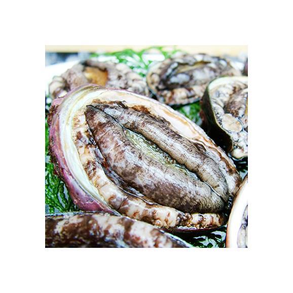 北海道 利尻島産(活 M)エゾアワビ 70g×3(北海道産 最高級 黒あわび)利尻昆布を食べて育った最高級品。ギフトにも大好評、高評価ありがとうございます!02