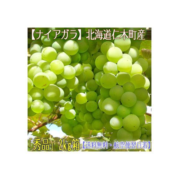 北海道 ぶどう 仁木産 ナイアガラ 2kg 8房前後(北海道産 ブドウ 秀品)気品漂う香り、マスカットより甘い。ギフトにも大好評、高評価ありがとうございます!01