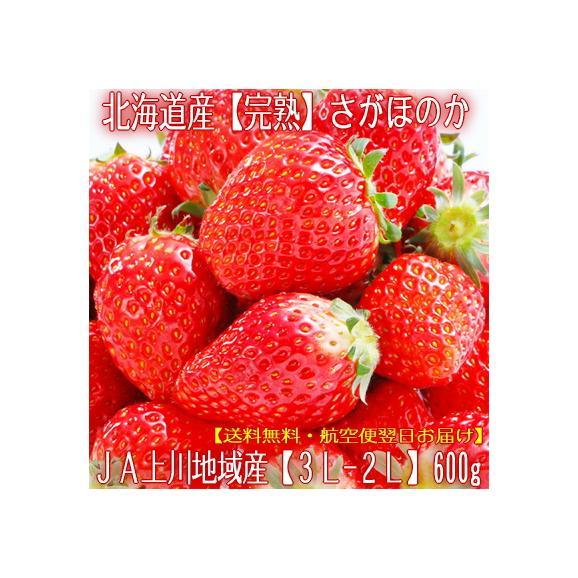 北海道産 いちご イチゴ さがほのか 600g (大粒 3L-2L 北海道 JA富良野 JA上川地域 秀品)上品で濃厚な味、ギフトにも大好評、高評価ありがとうございます!01