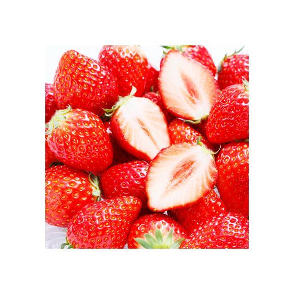 北海道産 いちご イチゴ さがほのか 600g (大粒 3L-2L 北海道 JA富良野 JA上川地域 秀品)上品で濃厚な味、ギフトにも大好評、高評価ありがとうございます!02