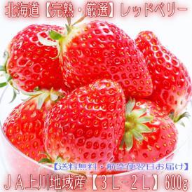 北海道産 いちご イチゴ レッドベリー 600g(大粒 3L-2L 北海道優良品種 JA富良野 JA上川 秀品)上品で濃厚 ギフトに大好評、高評価ありがとうございます!