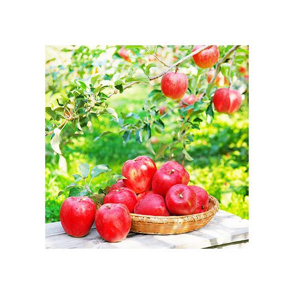 北海道産 りんご 昂林 こうりん 10kg 36玉前後(北海道 秋リンゴ JA余市 秀品)酸甘のバランスは最高傑作、ギフトにも大好評、高評価ありがとうございます!03