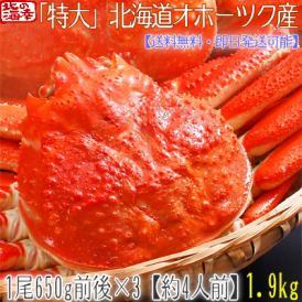 ズワイガニ(特大 姿)北海道産 650g前後×3尾(最高級 ボイル済 北海道)甘い蟹身、濃厚な蟹味噌は絶品。ギフトに大好評、高評価ありがとうございます!