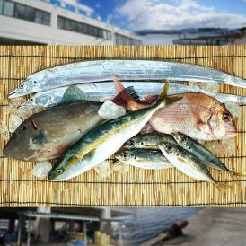 【送料無料】神戸垂水漁港より天然鮮魚を直送!!鮮魚詰め合わせセット 約4~5人前【11月21日出荷予定】【産地直送のため他商品と同梱不可】北海道・沖縄・離島は配送不可