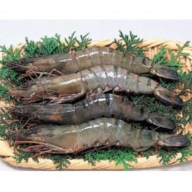 聖なる海老 (ブラックタイガー) オーストラリア産 1kg(31~40尾) 刺し身にも最適 (nh218247) 有頭殻つき