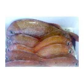 瀬戸内海 宮窪沖で取れた天然鯛(900g~1000g)【めききセレクション】【9】