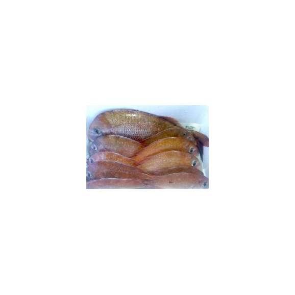 瀬戸内海 宮窪沖で取れた天然鯛(900g〜1000g)【めききセレクション】【9】01