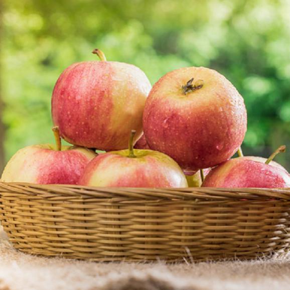 リンゴジュース 5本セット(サンふじ/サンジョナゴールド/サン王林/サン紅玉/サン蜜こうとく)02