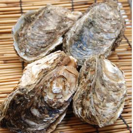 国産 岩牡蠣 4個セット