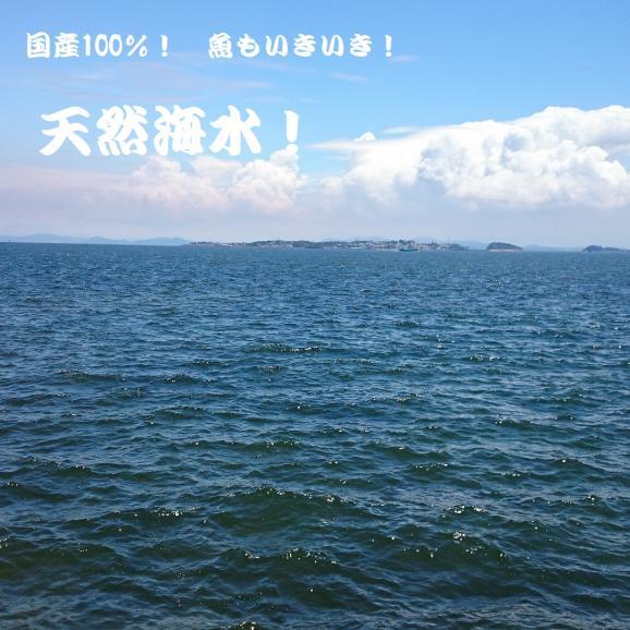 観賞用 国産ブレンド 天然海水 20ℓ 送料無料01