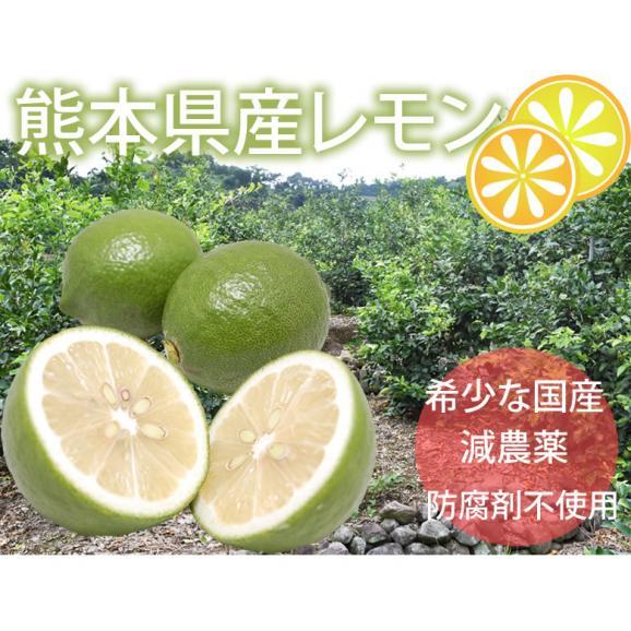 希少な国産レモン! 熊本県産レモン 1kg(S~L) 減農薬・防腐剤ワックス不使用 れもん グリーンレモン02