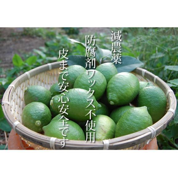 希少な国産レモン! 熊本県産レモン 1kg(S~L) 減農薬・防腐剤ワックス不使用 れもん グリーンレモン04