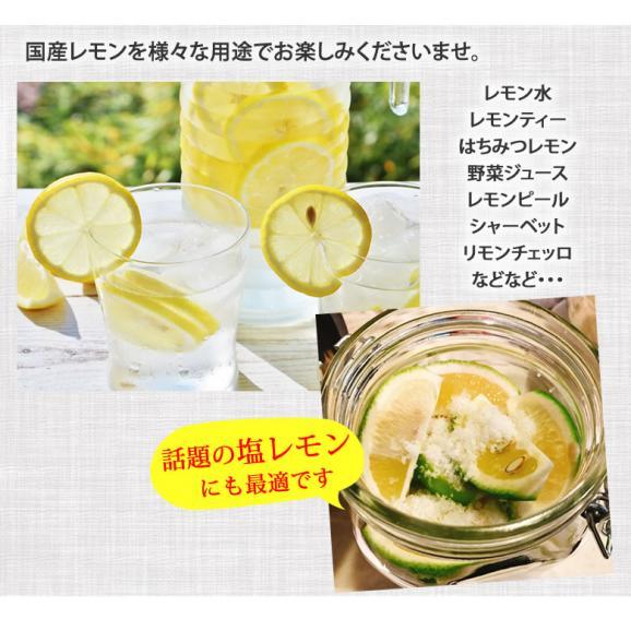 希少な国産レモン! 熊本県産レモン 1kg(S~L) 減農薬・防腐剤ワックス不使用 れもん グリーンレモン05