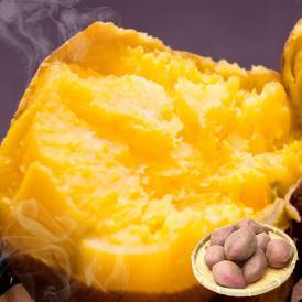 さつまいも 安納芋 種子島産 送料無料 秀品1.5kg 2セット購入で1セットおまけ 3セット購入で2セットおまけ あんのういも 芋