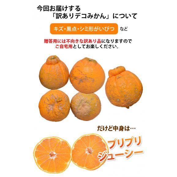 デコポン 同品種 訳ありデコみかん 1.5kg S〜3L 送料無料 2セット購入で1セットおまけ 3セット購入で3セットおまけ 熊本県産 フルーツ みかん ミカン 蜜柑05