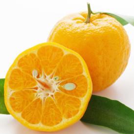ポンカン みかん 送料無料 秀品 5kg M~2L 熊本県産 濃い甘さと爽やかな香り デコポン ミカン 蜜柑