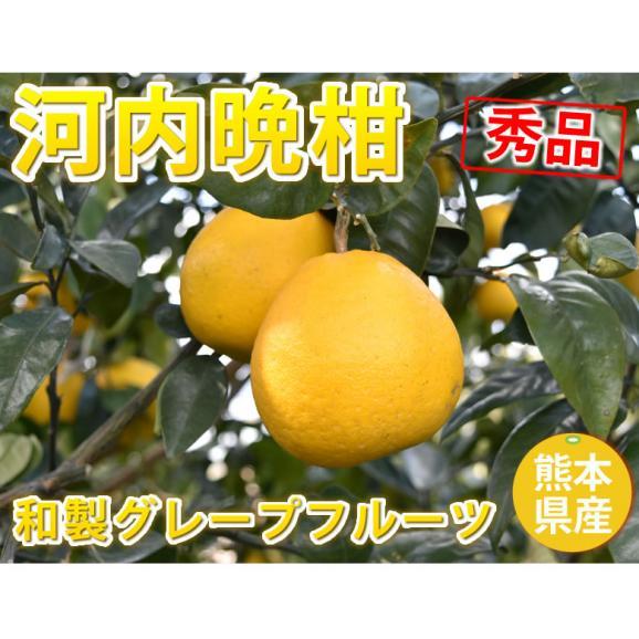 河内晩柑 文旦 みかん 送料無料 秀品 5kg M~2L 和製グレープフルーツ 熊本県産 ジューシーオレンジ 美生柑02