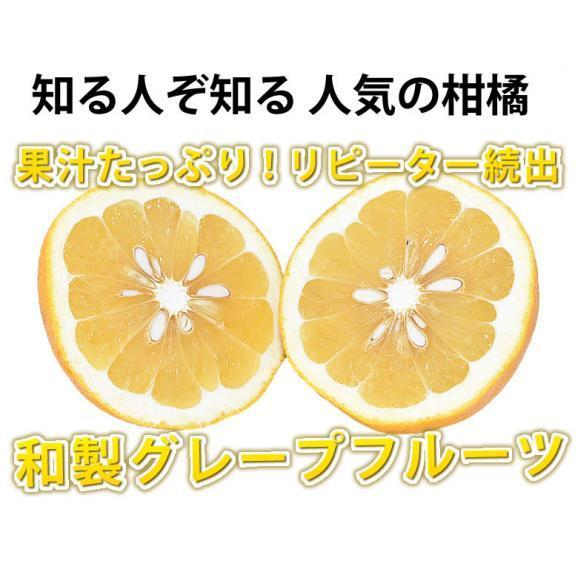 河内晩柑 文旦 みかん 送料無料 秀品 5kg M~2L 和製グレープフルーツ 熊本県産 ジューシーオレンジ 美生柑03