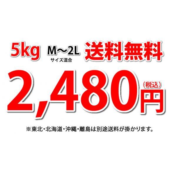 河内晩柑 文旦 みかん 送料無料 秀品 5kg M~2L 和製グレープフルーツ 熊本県産 ジューシーオレンジ 美生柑04