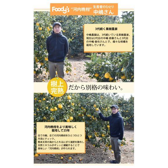 河内晩柑 文旦 みかん 送料無料 秀品 5kg M~2L 和製グレープフルーツ 熊本県産 ジューシーオレンジ 美生柑05