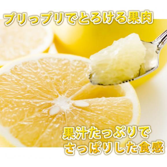 河内晩柑 文旦 みかん 送料無料 秀品 5kg M~2L 和製グレープフルーツ 熊本県産 ジューシーオレンジ 美生柑06