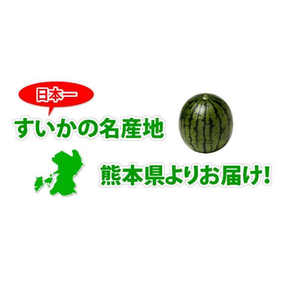 すいか 小玉すいか ひとりじめ 送料無料 秀品2玉 約3kg 熊本県産 西瓜 スイカ 03