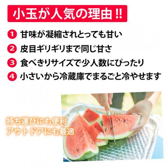 すいか 小玉すいか ひとりじめ 送料無料 秀品2玉 約3kg 熊本県産 西瓜 スイカ 05