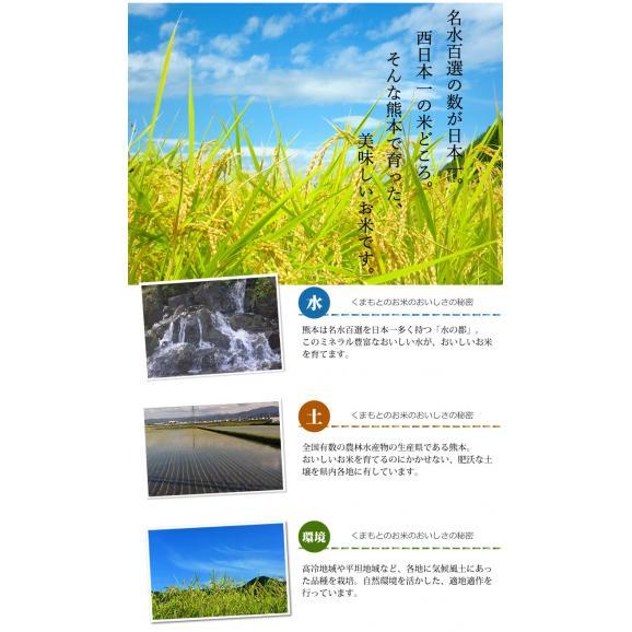 森のくまさん 米 送料無料 お試し 計900g 450g×2 約6合 熊本県産 ポイント消化 ポッキリ お米 白米 玄米 コシヒカリ ヒノヒカリ06
