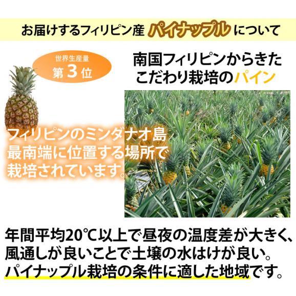 パイナップル パイン グルメパイン 送料無料 2玉(約1.8kg~2kg) フィリピン産 2箱購入で1箱おまけ05
