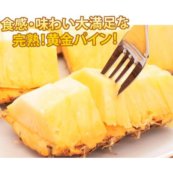 パイナップル パイン グルメパイン 送料無料 2玉(約1.8kg~2kg) フィリピン産 2箱購入で1箱おまけ06
