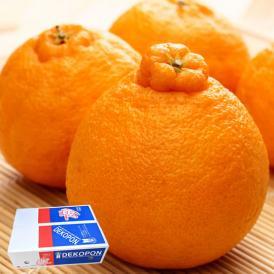 柑橘の王様