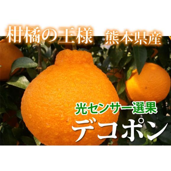 デコポン 光センサー選果 送料無料 秀品約2kg DEKOPON 熊本県産 不知火 フルーツ お取り寄せ みかん 蜜柑 ミカン02