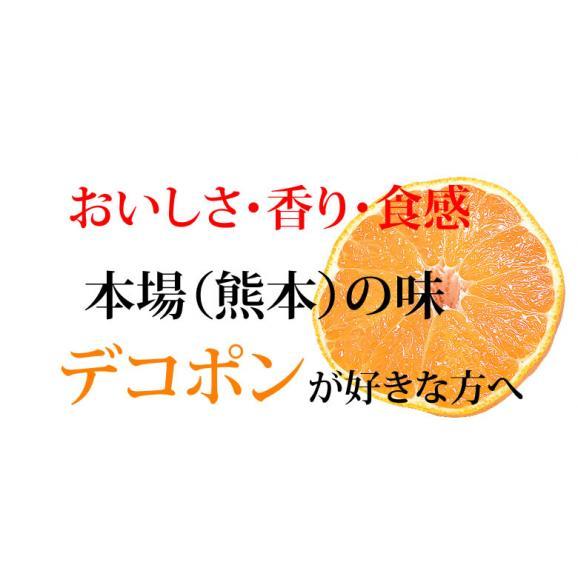 デコポン 光センサー選果 送料無料 秀品約2kg DEKOPON 熊本県産 不知火 フルーツ お取り寄せ みかん 蜜柑 ミカン03