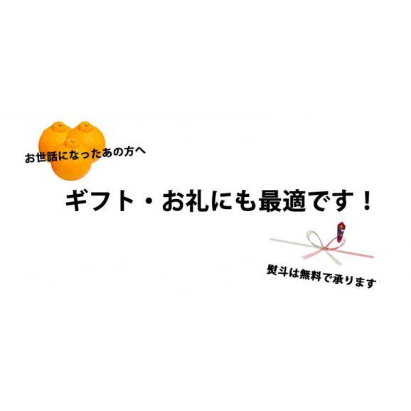 デコポン 光センサー選果 送料無料 秀品約2kg DEKOPON 熊本県産 不知火 フルーツ お取り寄せ みかん 蜜柑 ミカン04