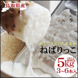 【予約販売】【ねばりっこ】約5kg(3-6本入)送料無料 鳥取県特産品とろろ[常温]贈答用【準備が整い次第出荷】