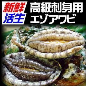 【送料無料】〔エゾアワビ〕[活生]5枚セット(50g×5枚)〔冷蔵〕【出荷の温度帯が選べます】