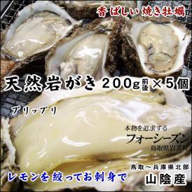 送料無料!【山陰産】天然岩牡蠣(カキ)[生]5個セット約1kg(200g前後が5個入)【8月上旬以降受付け順出荷(指定不可)】