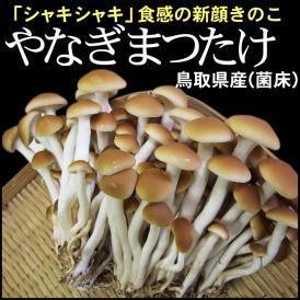 鳥取県産「やなぎまつたけ」 120g×6パック [冷蔵便]【送料無料】ヤナギマツタケ