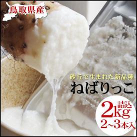 【予約販売】【ねばりっこ】(2-3本入)約2kg送料無料 鳥取県特産品とろろ[常温]贈答用【準備が整い次第出荷】