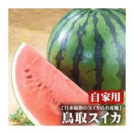 送料無料!大玉スイカ(訳あり) 1玉(6kg以上)[鳥取県産]甘くて水分たっぷり♪[常温]【収穫があり次第(日にち指定不可)】
