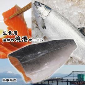 鳥取県産【境港サーモン(銀鮭)】フィーレ(400-500g程度)生食用[冷凍]