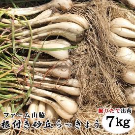 【予約販売】鳥取県北栄町産『ファーム山脇さんの葉付き根付き砂丘らっきょう』 【7kg】(サイズ混じり)砂付き[常温]<br>【5月下旬~6月下旬にご予約順発送予定】鳥取らっきょう ラッキョウ